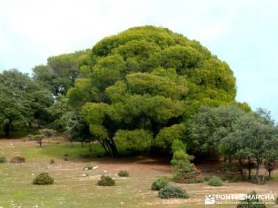 Garganta de Picadas - Vía Verde del Alberche; rutas senderismo sierra de madrid